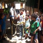 Horse Riding Activities