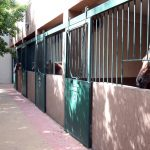 Horse Riding Stables Sheikh Zayed