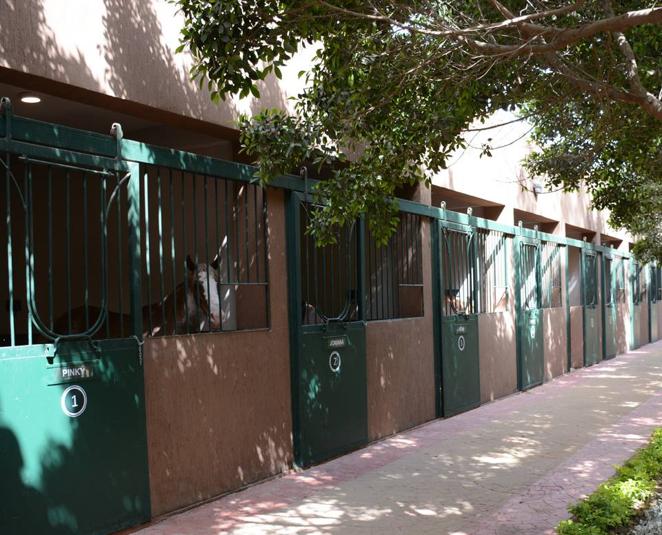 Horse Boarding Stables, Sheikh Zayed, 6th of October | Ruya