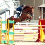Showjumping Egypt